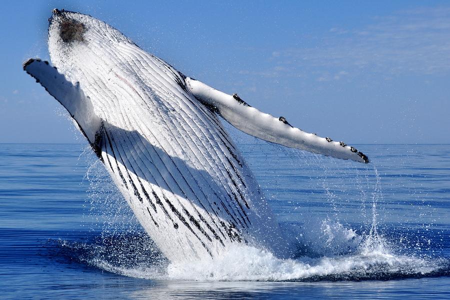 cabo-whale-watching-trip